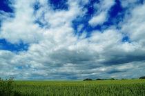grüner Weizen im Sonnenlicht by hannes-bielefeldt