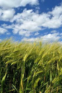 himmlisches Getreide von hannes-bielefeldt