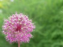 Der rosa Ball by hannes-bielefeldt