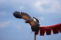 Adler1