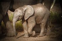 Elephant so little by martin buschmann