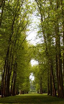 Summer Trees by Kelsey Horne