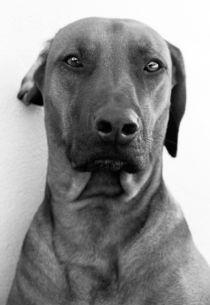 Dog Portrait von Andrew Lever