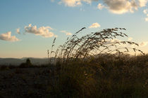 Sunset grasses von George Kay