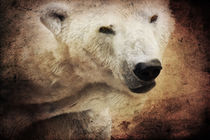 The polar bear von AD DESIGN Photo + PhotoArt