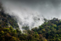 Misty Rain Forest by David Pinzer