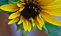 sun flower by emanuele molinari