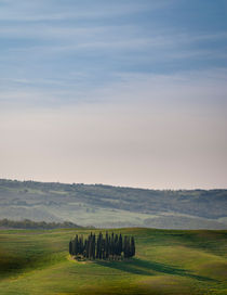 Italian Cypress Trees by Russell Bevan Photography