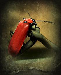Roter Feuerkäfer von Elke Balzen