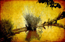 River Art von Milena Ilieva