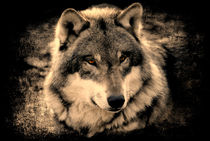 Wolf by Elke Balzen