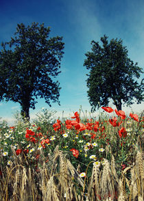 Mohnblumen im Kornfeld Landschaftsbild von Falko Follert by Falko Follert