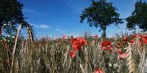 Mohnblumen im Kornfeld Landschaftsbild von Falko Follert No.3 von Falko Follert