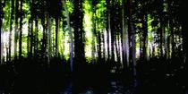 Wald - Panorama. von Bernd Vagt