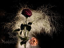 Rosengrüße -1- von Christine  Hofmann