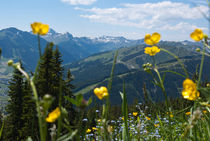 Alps in Summer von Iryna Mathes