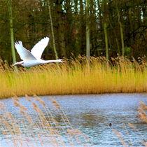 IM ANFLUG by © Ivonne Wentzler