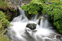 Little Creek von Michael Lindegger