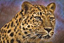 Leopard No. 400 by Roger Brandt