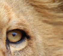 Im Auge des Löwen von buellom