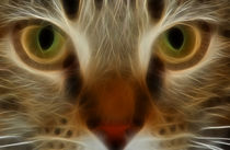 Cat Eyes by Kathleen Stephens