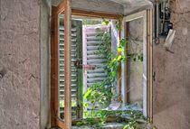 die Natur kehrt zurück by Urban Pics