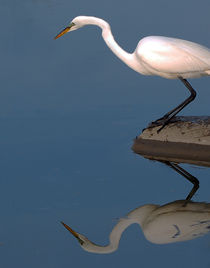 Mirrored Egret by Kathleen Stephens