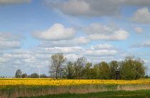 Frühlingswiese - spring meadow von ropo13