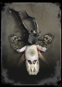 Der Staat der Insekten_Insekt 3 von Carsten Gude