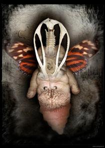 Der Staat der Insekten_Insekt 4 von Carsten Gude