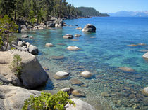 Forested-shores-of-lake-tahoe