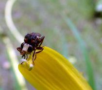 Insekt Makro von Simone Cuambe