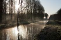 Sun through the trees in the Purmerbos by Alex Voorloop