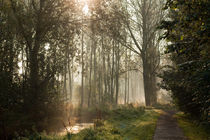 Sunrise through the forest leaves by Alex Voorloop