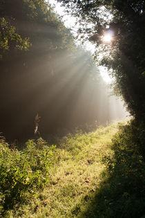 Sunbeams through the forest leaves by Alex Voorloop