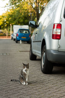 Two cats in the street where I live by Alex Voorloop