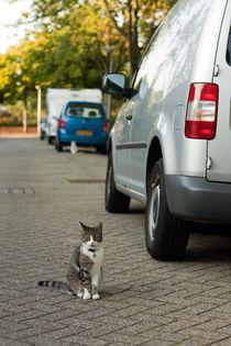 Mg-0171-cat-car