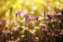 Verträumte Sommerwiese von Susann Mielke