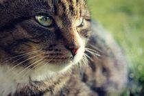 Lady Cat von Sissel Grindheim