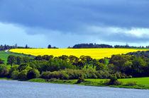 Scottish Countryside by Pravine Chester