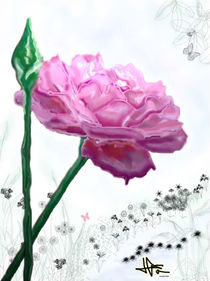The Sant Jordi's rose by Lluïsa Díaz