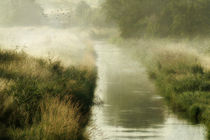 misty morning on the brook by Franziska Rullert