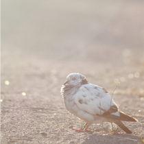 Silence ~ Sleeping Bird von syoung-photography