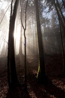 Wald von Norbert Fenske