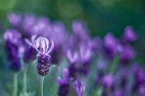 Breathing summer perfume von Maria Ismanah  Schulze-Vorberg