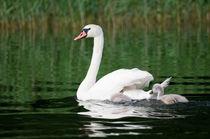 Bird family von photogatar