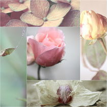 Pastell Flower Collage von syoung-photography