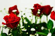 Red rose von reorom
