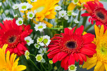Gerbera flowers by reorom