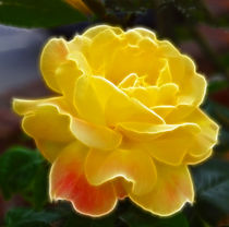 Yellow Rose hint of pink fractals  von David J French